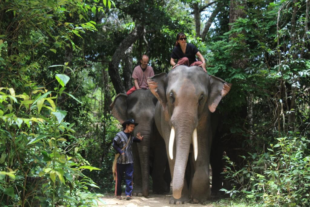 Riding the Elephant through forest