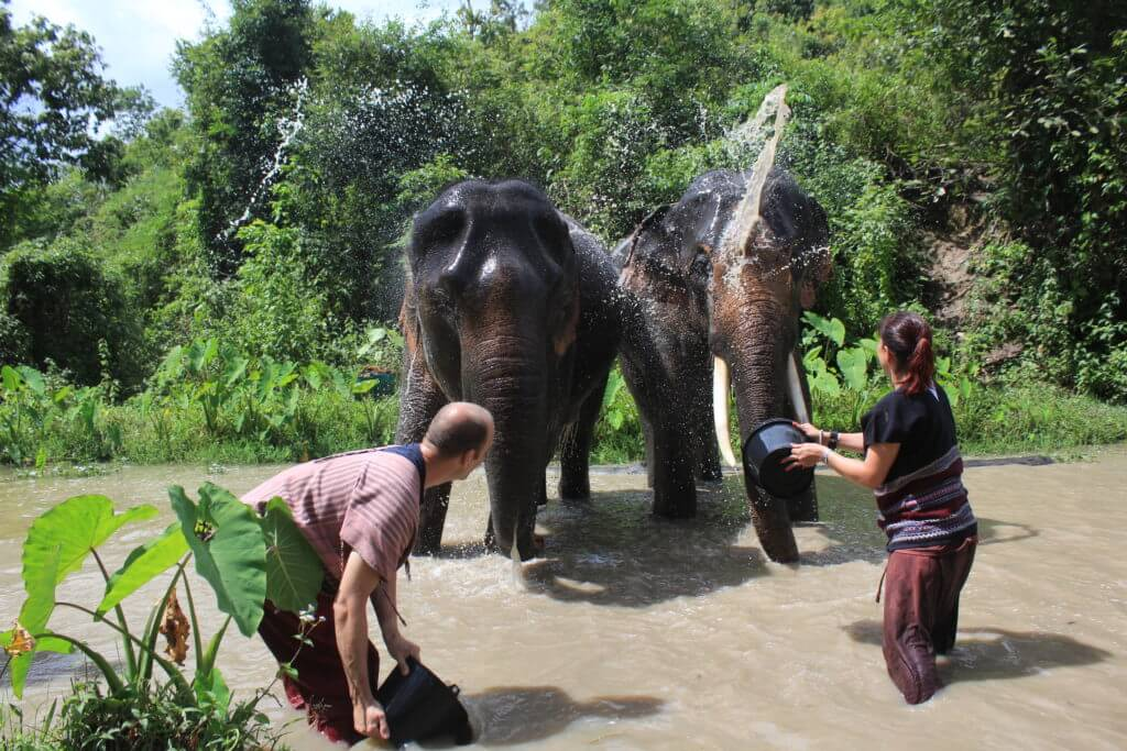 Rinsing off the elephants